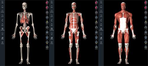 Постепенное добавление элементов мышечной системы
