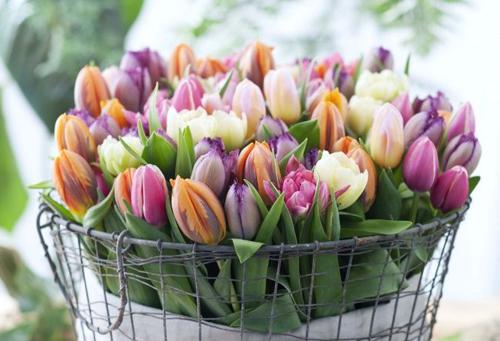 С праздником весны, нежности и красоты!